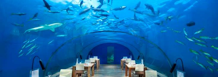 The most expensive restaurants in the world restaurant for Ithaa restaurant maldives